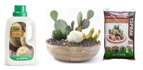 Cactus care set